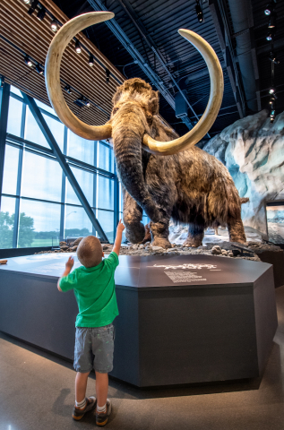The Bell Museum in St. Paul — featuring an 11-foot-tall woolly mammoth model from the Ice Age — offers one Sensory-Friendly Saturday per month, which involves opening the museum two hours early.  (The next two events are May 18 and June 15.) Photo by Joe Szurszewski / Courtesy of Explore Minnesota